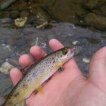 Pesca a mosca sull'alto trebbia