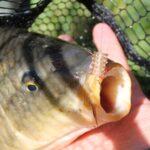 Micropasturatore Milo con Fish24