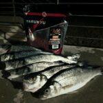 Pesca in mare Marukyu