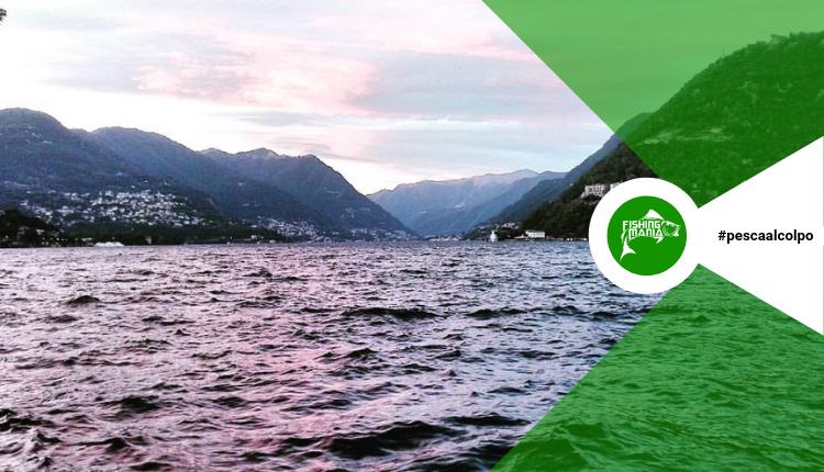 Provinciale a Coppie di Pesca al colpo di Como 2019 - 2° prova